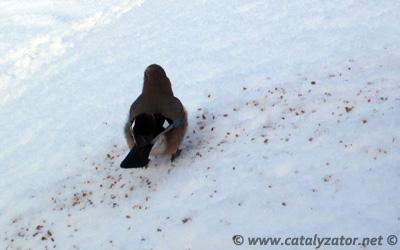 Fugletelling i huttiheitaskogen.